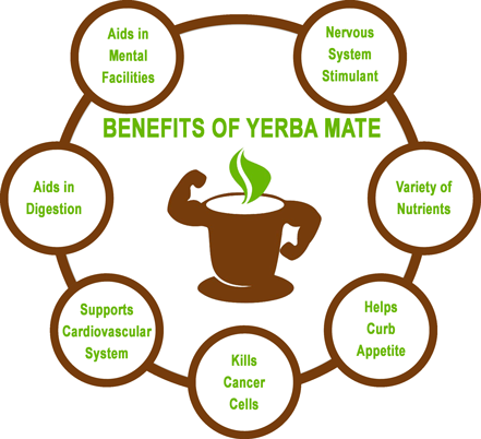 Yerba Mate Benefits Infographic