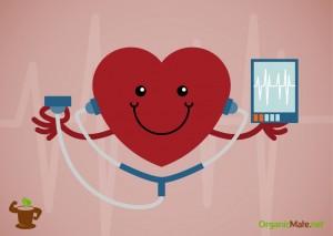 Yerba mate nad Cardiovascular System