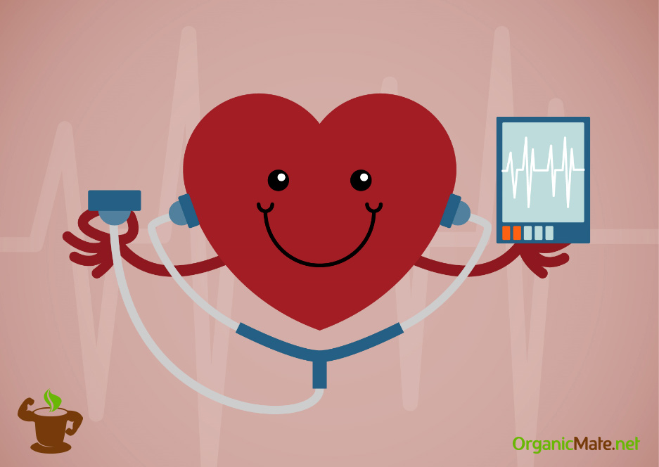 Health benefits of Yerba mate - Cardiovascular System