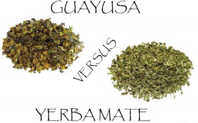 Guayusa vs. Yerba mate