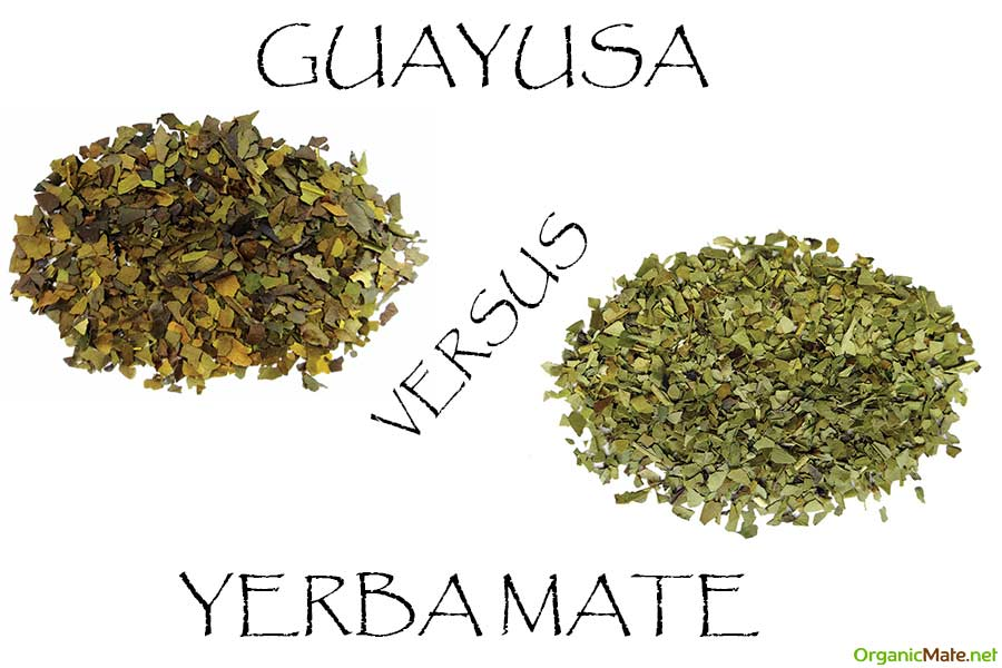 guayusa versus yerba mate